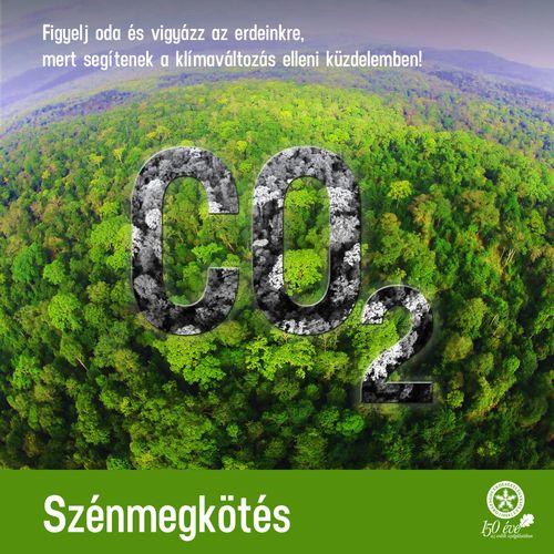 A klímaváltozás és az erdők