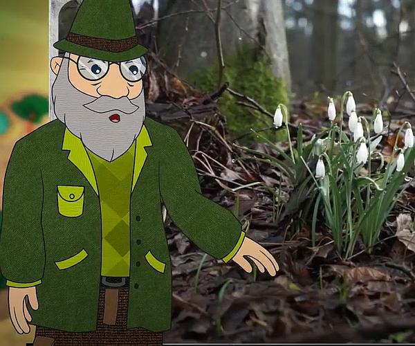 Mi történik tavasszal az erdőben?